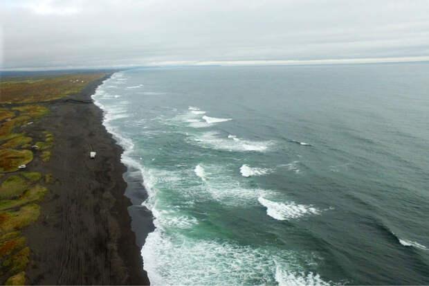 Океанолог предположил, когда восстановится экосистема на Камчатке