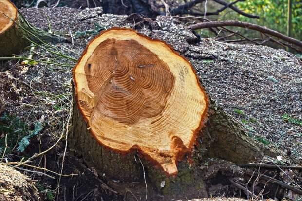 Власти Симферополя заплатят 1,5 млн руб за уничтожение деревьев