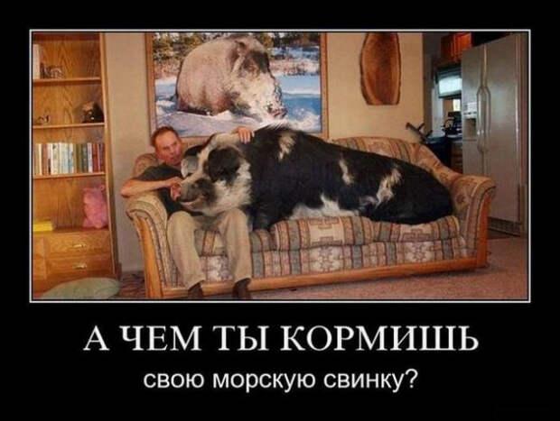 5402287_1612426248_demki6 (640x483, 78Kb)