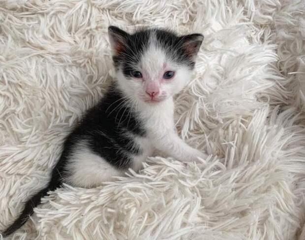 Котёнок, переживший одиночество, таскает за собой игрушечную коровку. Ему бы ещё живого друга…