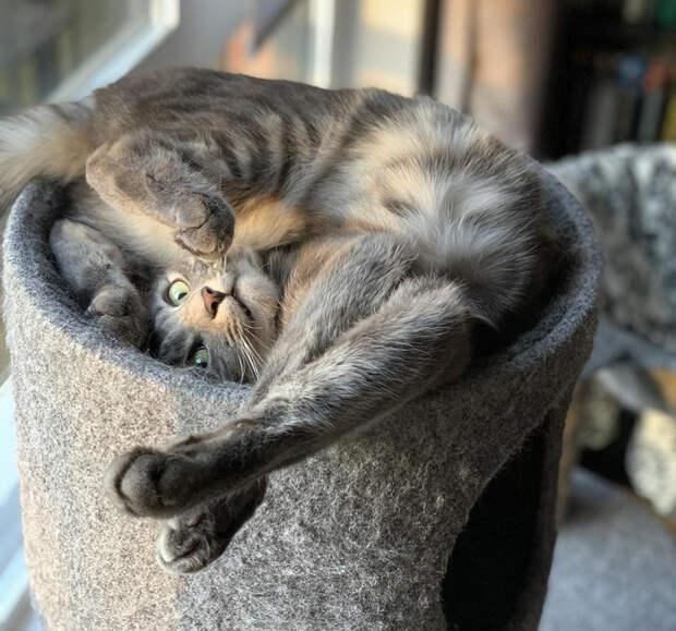 Для кошки важно лишь желание заснуть, а место сгодится любое