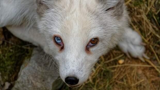 Зооуголок в Чувашии начали обживать мраморные лисы и песцы