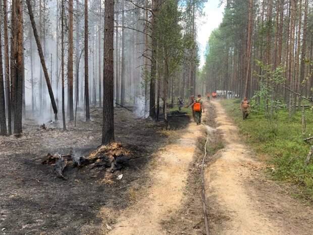 Власти Карелии просят туристов не ходить в леса региона — там бушует 20 пожаров