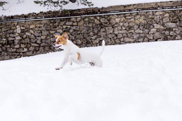 Собака пожертвовала жизнью ради спасения мальчика в Коми