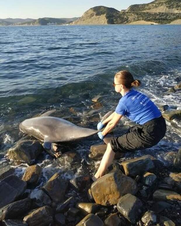 У берегов Анапы обнаружили тела молодых дельфинов