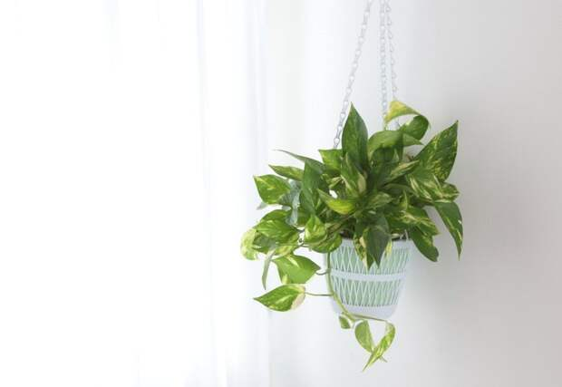 9 комнатных растений для тех, кто уничтожает все, к чему прикасается