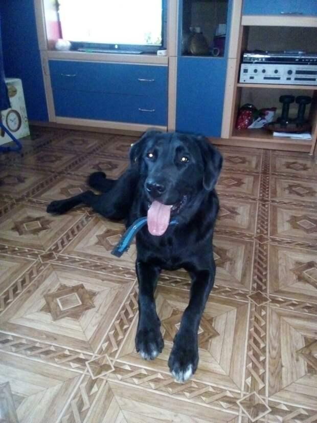 собака на полу
