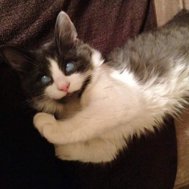 Другие котята не принимали слепого брата, но он вырос великолепным котом до и после, история, история спасения, коты, котята, кошки, особенные животные, слепые