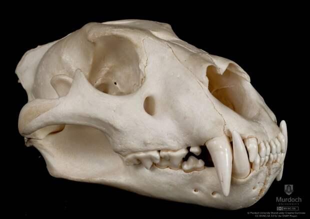 А леопарды зубов не чистят!