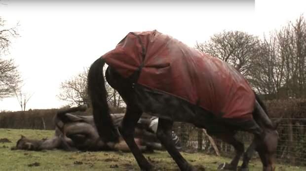 Встреча лошадей после долгой разлуки тронет даже самое суровое сердце! Любовь, встреча друзей, дружба, животные, лошади, нежно, нежность, трогательно