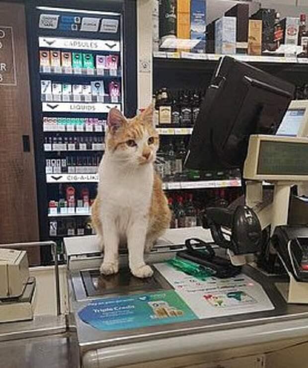 Кот в магазине