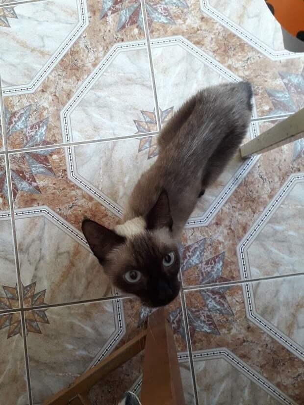 Мика - квартирная пленница дружба, жизнь, кошка, приют, спасение