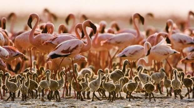 Крупнейшие в мире скопления животных. Размером больше города