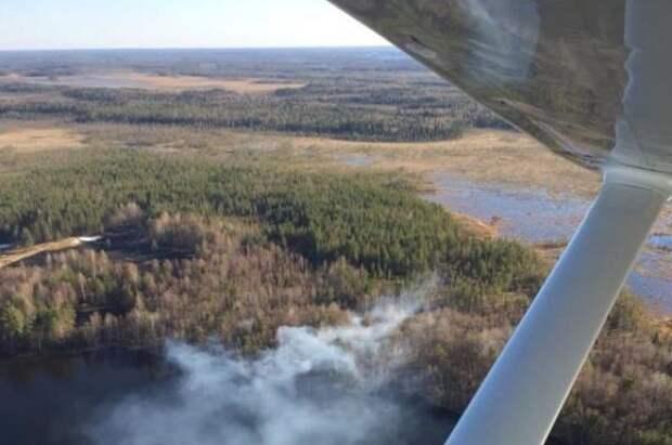 В России за сутки ликвидировали 138 лесных пожаров