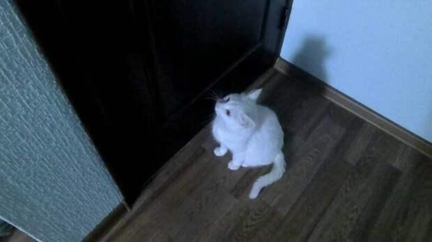 14. Пытаются вместе с котом решить, хочет ли он выйти из комнаты или хочет остаться домашний питомец, животные, кот, кошка, привычки, прикол, юмор