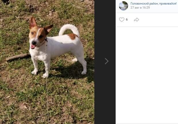 В Головинском житель не может вернуть себе потерянную собаку