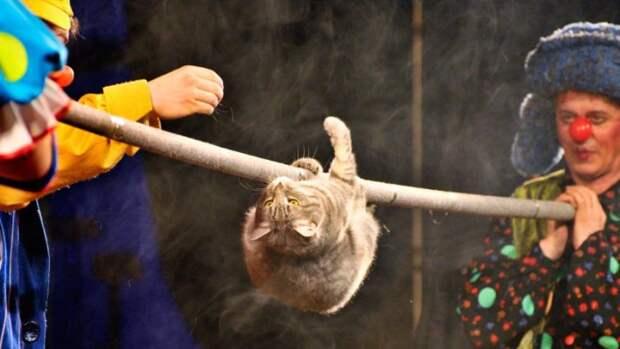 Кошка - театральная гимнастка. | Фото: vmireinteresnogo.com.