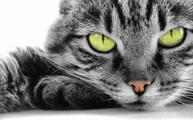 Жизнь с котом, или как не сойти с ума от одиночества.3