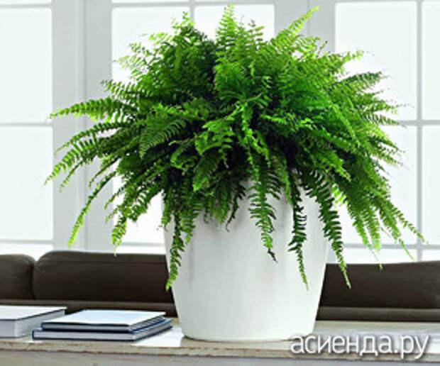 Растения для северных окон
