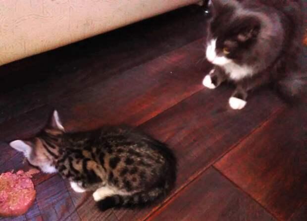 Красавица Рыська ищет родителей