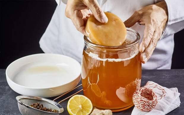 Чайный гриб снова популярен. Польза, противопоказания, рецепт приготовления