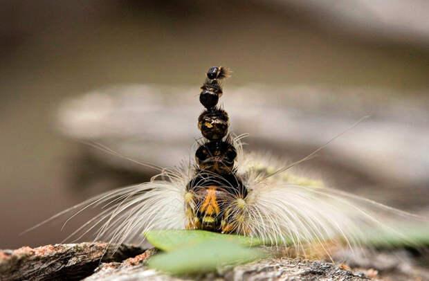 гусеница с несколькими головами