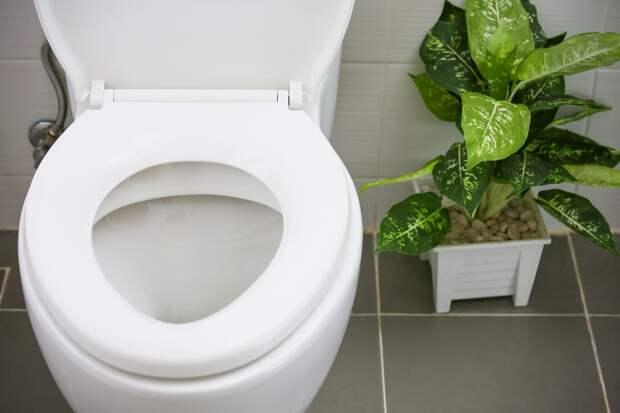 Простое правило в туалете, которому нужно научить всю семью