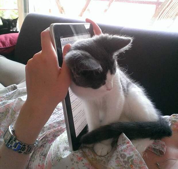 18 котов, нуждающиеся в Вашем внимании именно тогда, когда Вы читаете