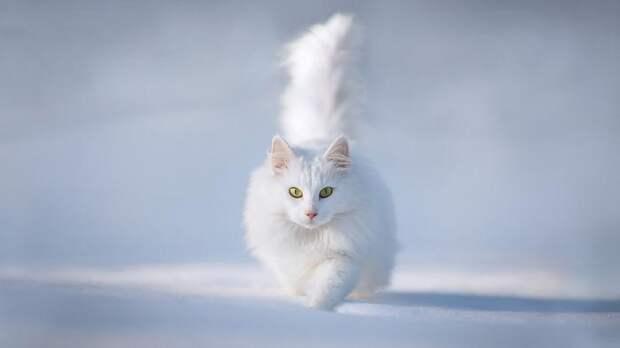 сколько живут персидские коты