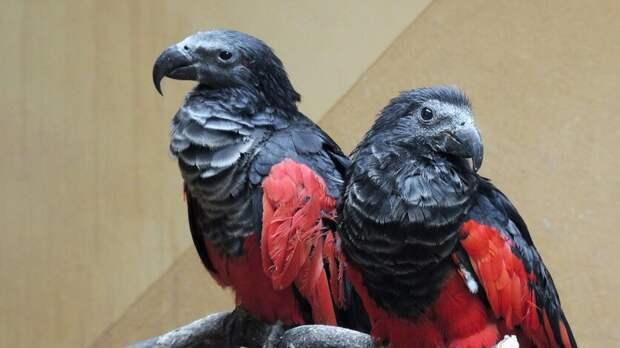 Птиц Дракул передала Ростовская область Московскому зоопарку