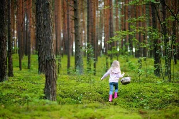 В лес с ребенком: правила, которые сохранят жизнь и здоровье