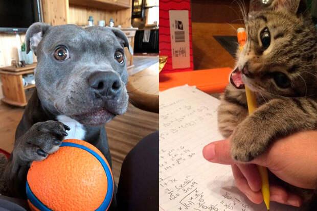 10+ кошек исобак, которые всегда добиваются того, чего хотят