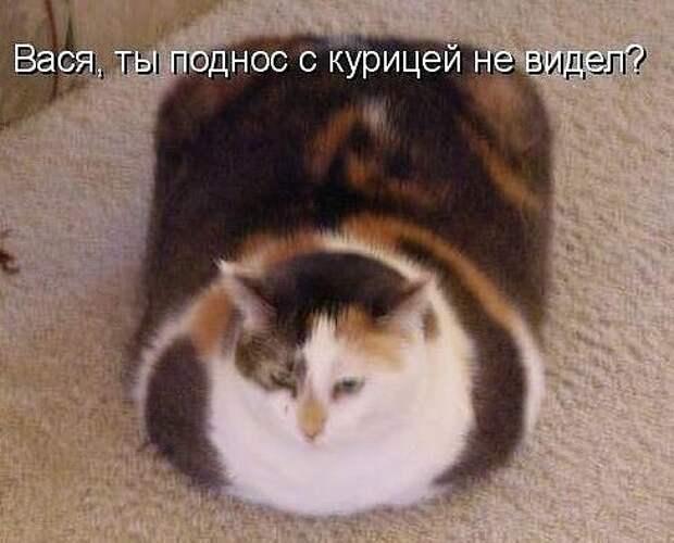 Про кота и диету.