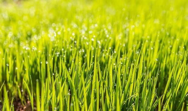 Во дворе на Вертолетчиков высадили новый газон — Жилищник