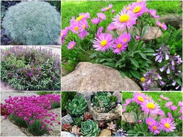 Растения, которые почти не нужно поливать