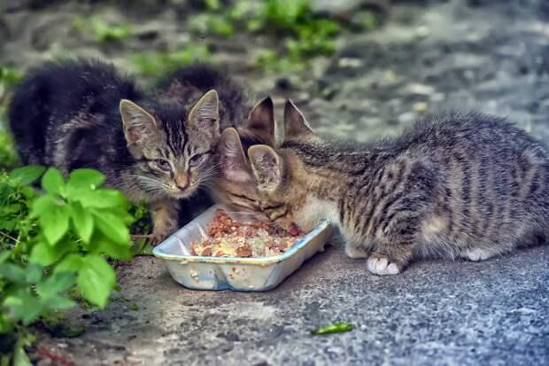 мы просим вас помочь нам спасти 4 малышей. На улице они могут не дожить даже до осени...