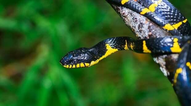 В зоопарка Бронкса из террариума сбежала ядовитая змея