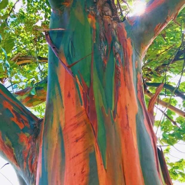 25 действительно необычных деревьев, которые мало кто считает настоящими