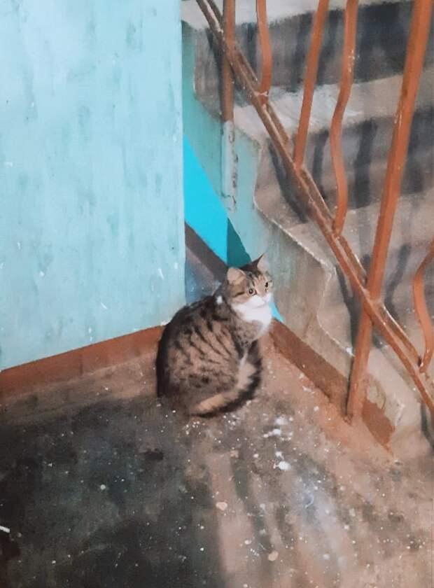 Кошечка в подъезд, где собираются плохие компании - уже были случаи насилия над животными и их отравления. СРОЧНО ищем передержку или хозяев бедной кошечке, пока...