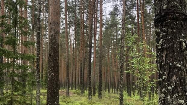 Житель Саратова во время похода за грибами нашел труп в лесу
