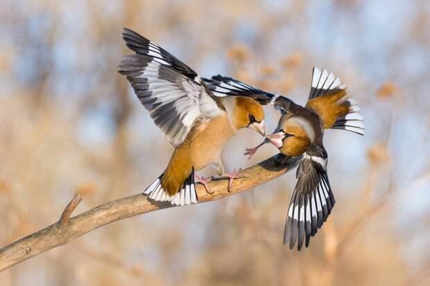 Необычные, редкие для наших широт птицы объявились в зимнем Новосибирске. Фото: Илья ЛАТЫПОВ