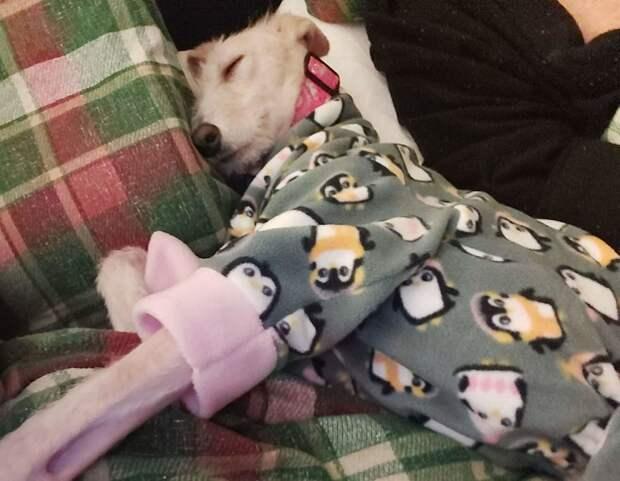 Истощённую собаку на грани смерти подобрали на улице. Вот её фото сегодня