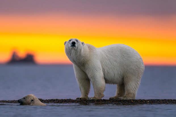 Медведь украл у мужчины рыболовные принадлежности в Якутии