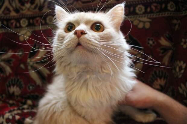 Степан - кот с характером!