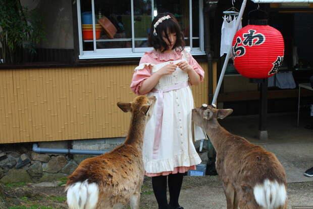 Топ-8 причин посетить Японию