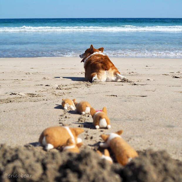 10 милых фото приключений корги и его маленьких игрушечных друзей