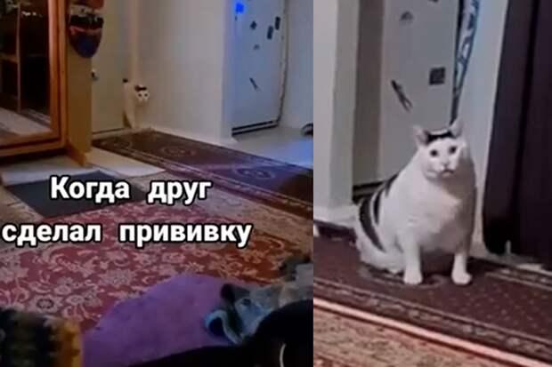 В Подмосковье кот матом агитировал за вакцинацию от COVID-19