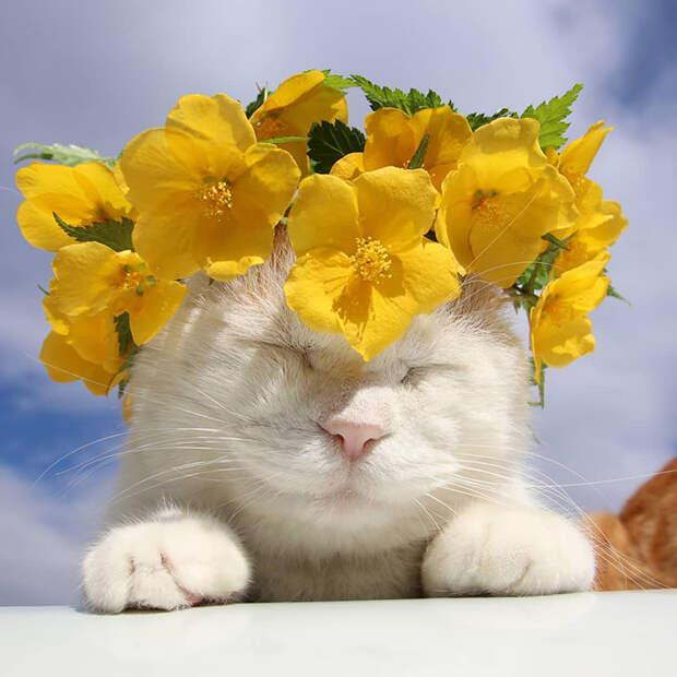 В память о Широ — самом знаменитом коте, который познал дзен