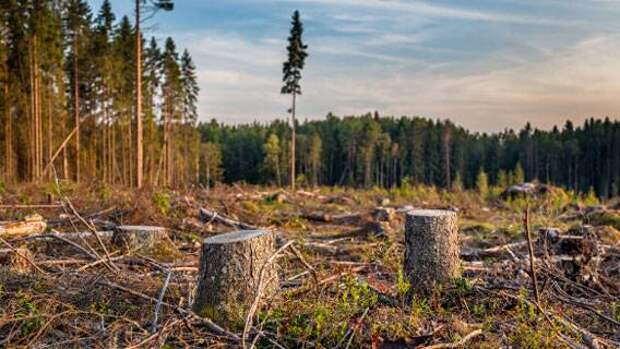 Лес на Байкале вырубят, ...но аккуратно