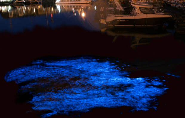 Морской порт Зебрюгге, Бельгия Дополнительной подсветкой может похвастаться и порт Зебрюгге. В темное время суток планктон окрашивает воду у причалов в голубой цвет.